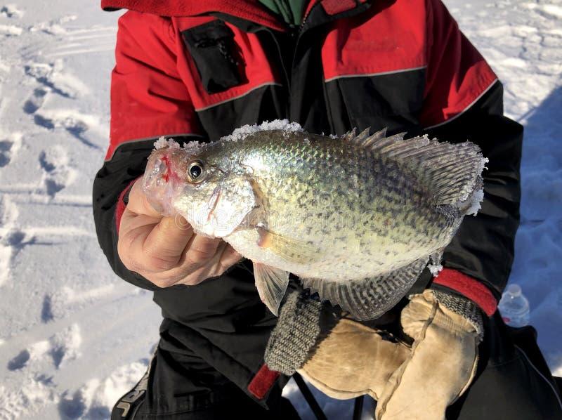 Рыболов льда с Crappie стоковое фото