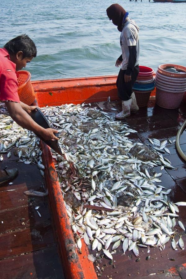 Рыбопромысловые деятельности на рте реки Mae Klong, Таиланда стоковые фото