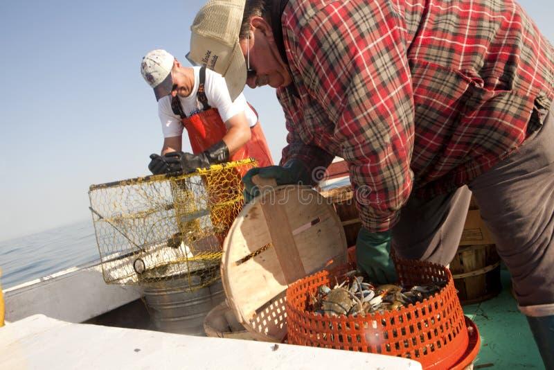 Рыболовы на работе, Чесапике стоковые изображения rf