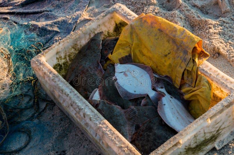 Рыболов продавая рыб прямо от шлюпки после задвижки утра стоковое изображение rf