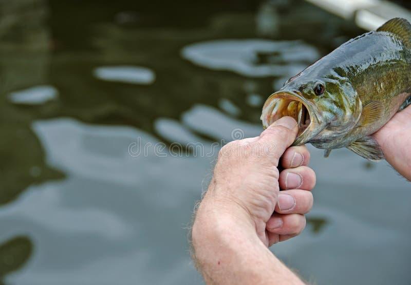 Рыболов с басом smallmouth стоковая фотография