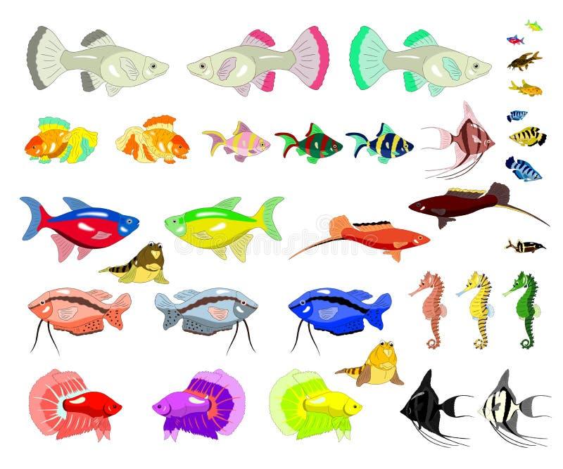 Рыбы аквариума изолированные на белой предпосылке иллюстрация штока