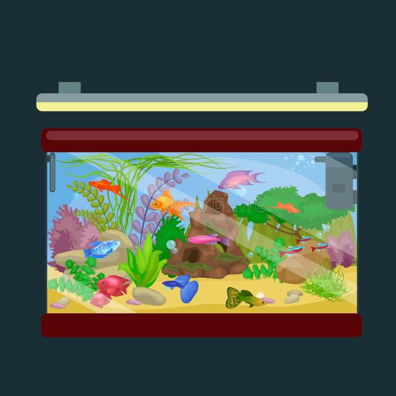 Рыбы аквариума, морская водоросль подводная, танк изолированный на темной предпосылке иллюстрация штока