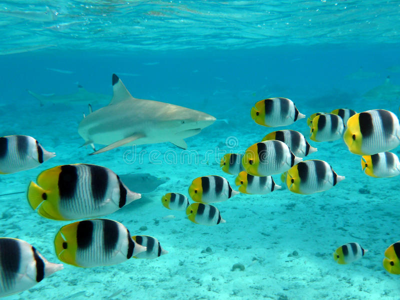 Рыбы акулы и бабочки стоковая фотография rf