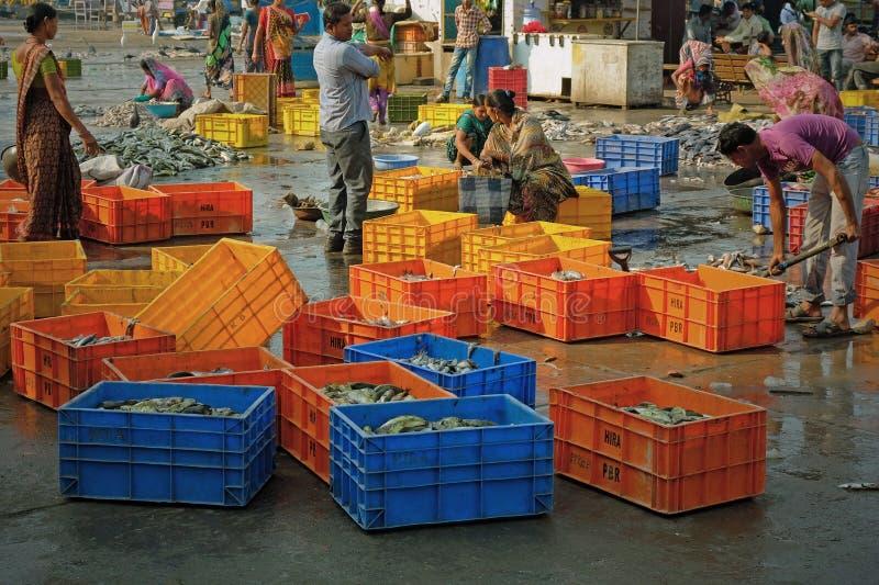 Рыбы будучи сортированным на индийской набережной стоковая фотография rf