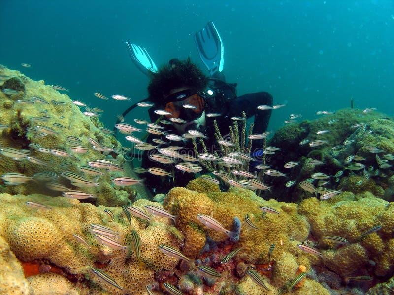 рыбы водолаза стоковое изображение