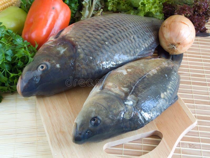 рыбы вырезуба близкие вверх стоковые изображения