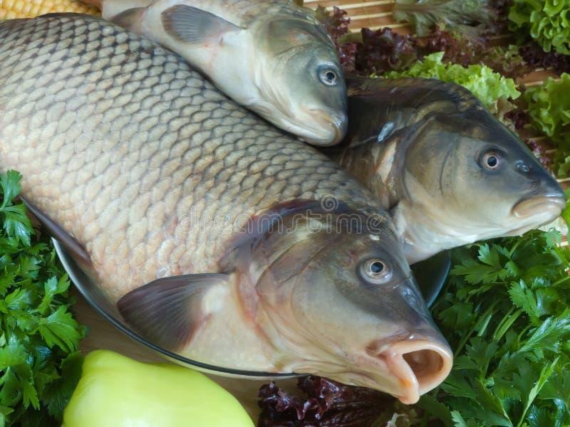 рыбы вырезуба близкие вверх стоковые изображения rf