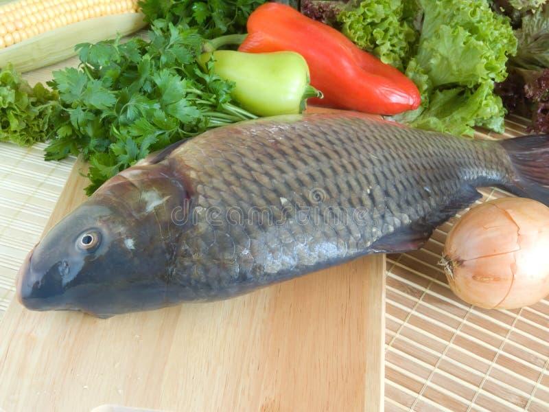 рыбы вырезуба стоковые фотографии rf