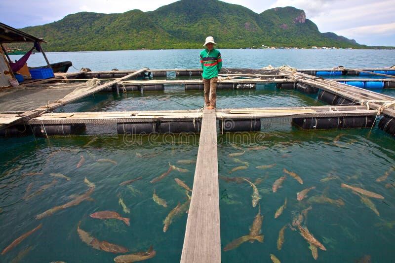 рыбы Вьетнам хуторянина стоковое изображение
