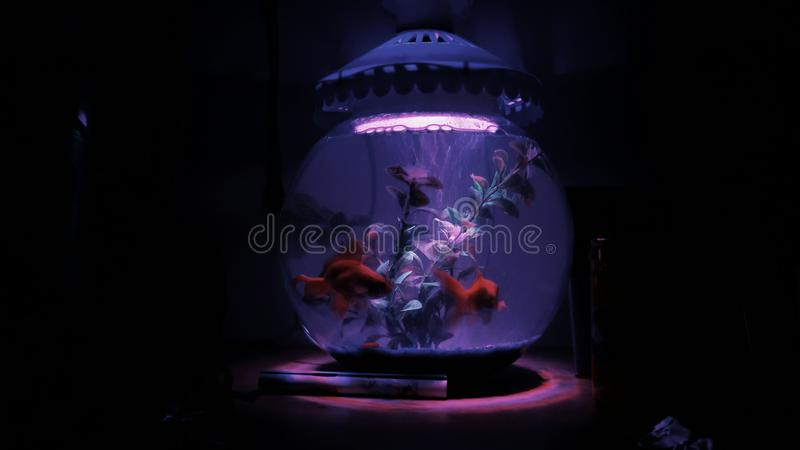Рыбы в аквариуме стоковые изображения