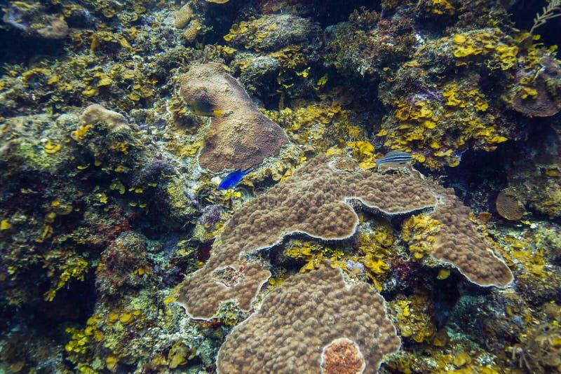 Рыбы в коралловом рифе стоковое изображение rf