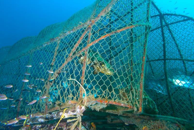 Рыбы в ловушке рыб стоковая фотография
