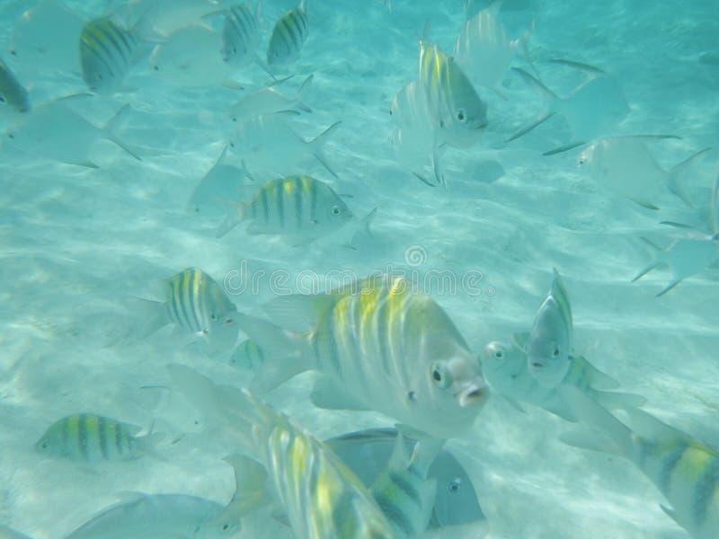 Рыбы в океане стоковые изображения