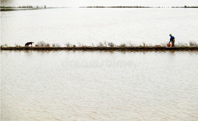 Рыбы задвижки человека на затопленном поле стоковые фотографии rf