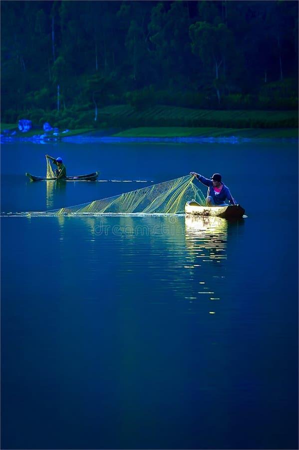 Рыбы задвижки в утре стоковое фото rf