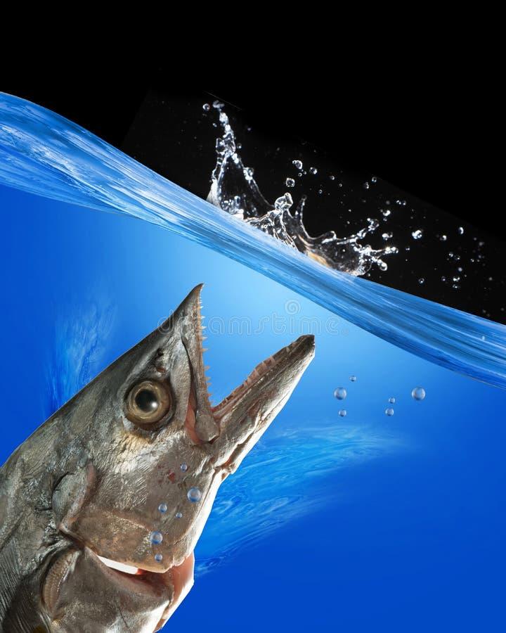 Рыбы изверга. стоковое фото rf