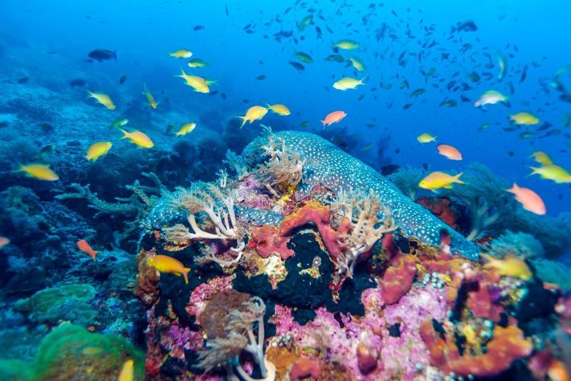 Рыбы и дно моря экосистемы стоковые изображения rf