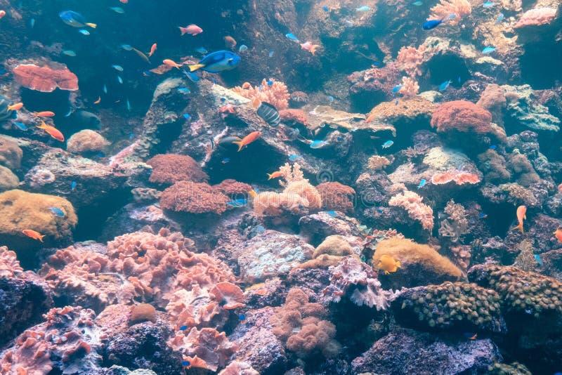 Рыбы и риф кораллов подводный, красочная морская жизнь стоковые фото