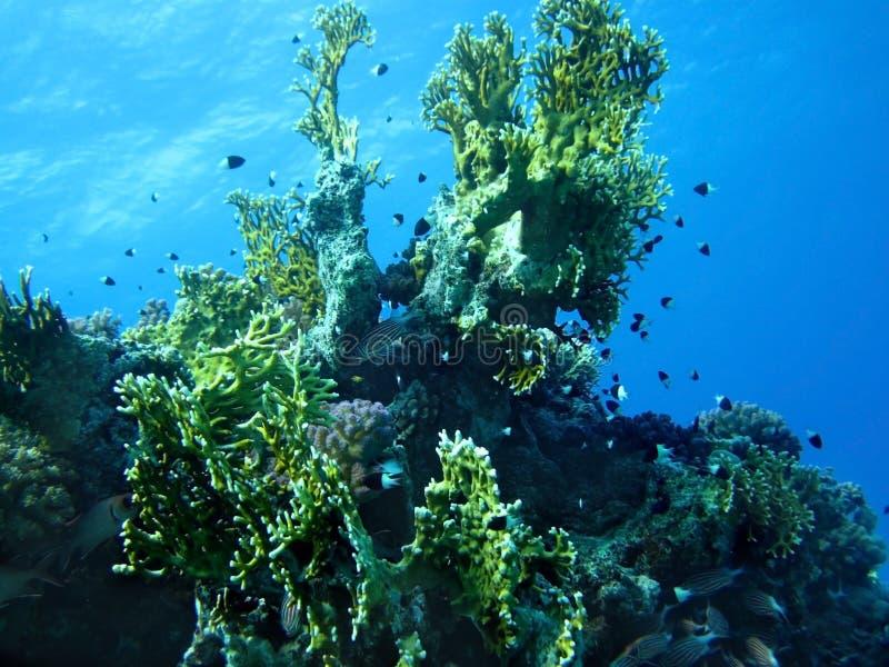 рыбы коралла собирают воду стоковая фотография