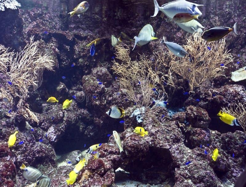 рыбы коралла собирают воду стоковое фото rf