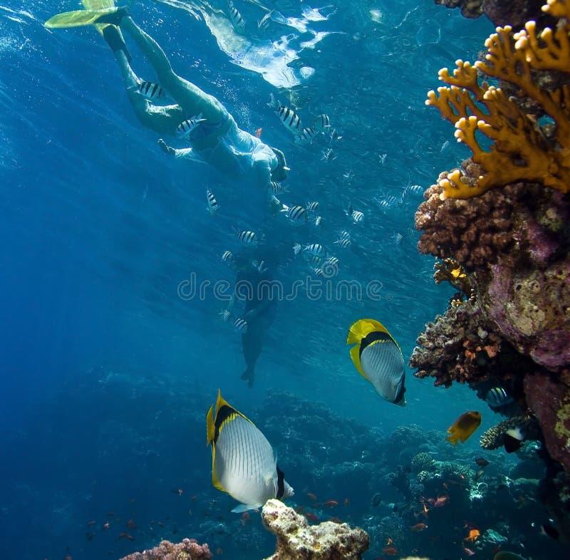 рыбы коралла стоковое изображение rf