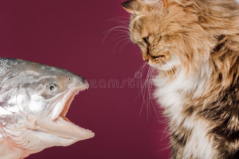 рыбы кота стоковое изображение rf