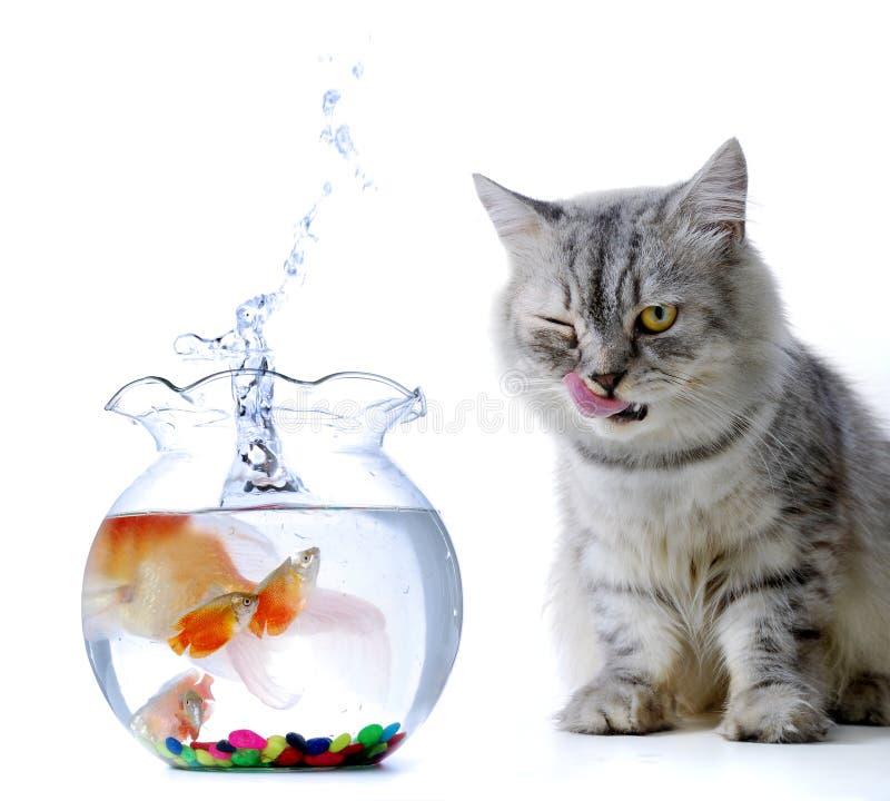 рыбы кота стоковые изображения rf