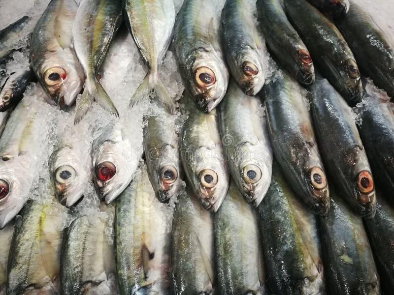 Рыбы, который нужно съесть стоковые изображения
