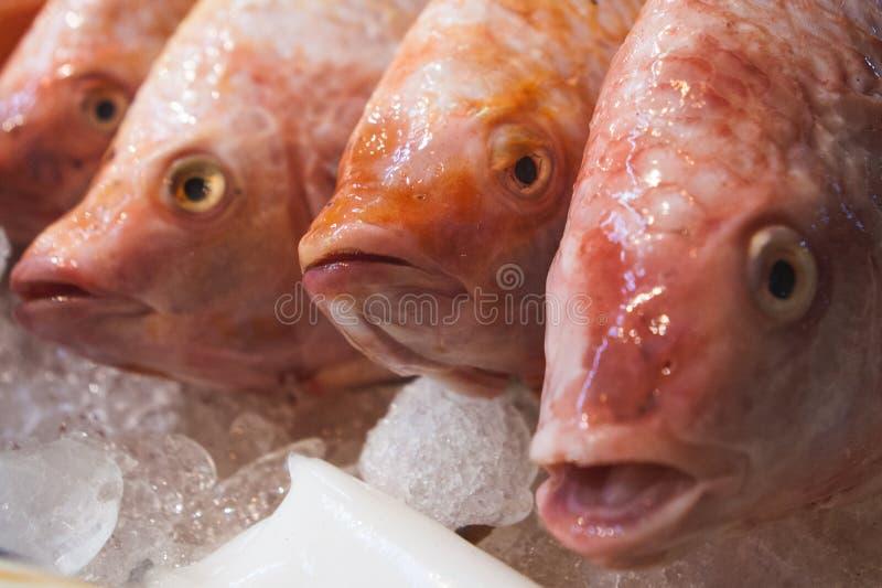 Рыбы красного люциана проданные на продовольственном рынке улицы глохнут Чайна-таун, Бангкок, Таиланд стоковое изображение rf