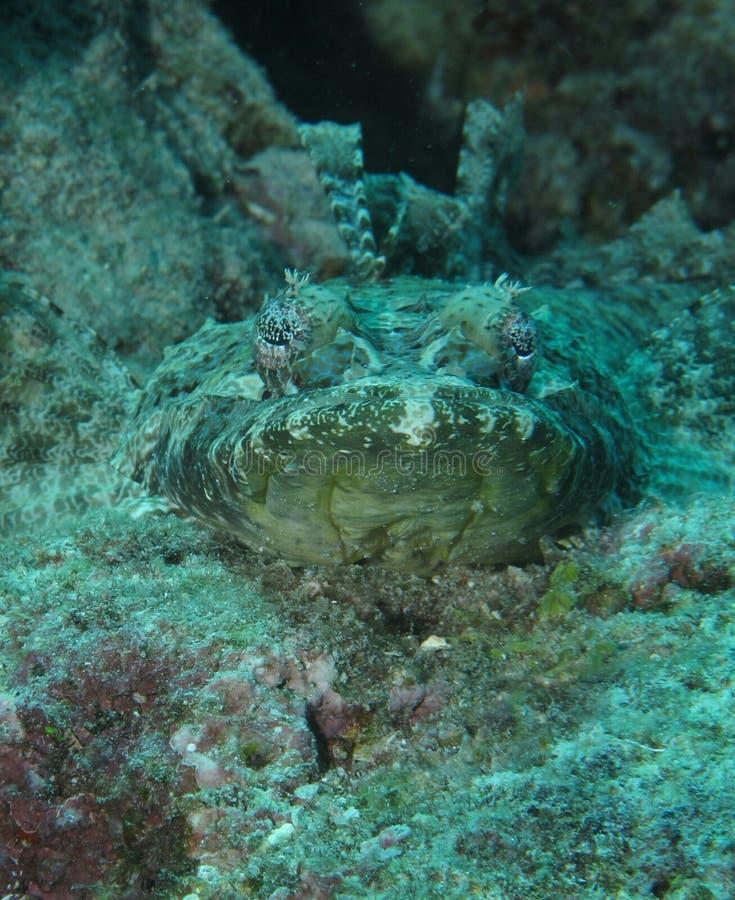 Рыбы крокодила стоковые фото