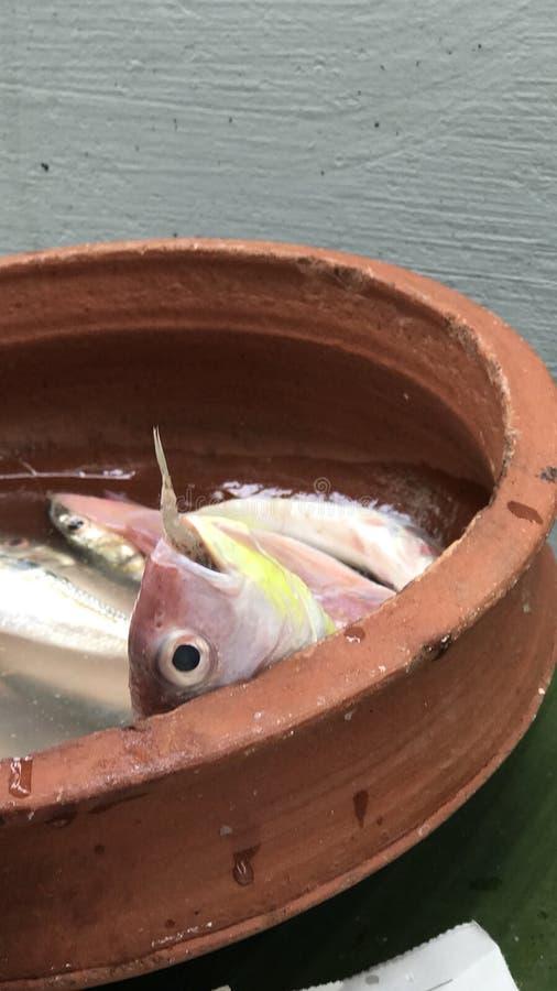Рыбы малых рыб большие стоковое фото