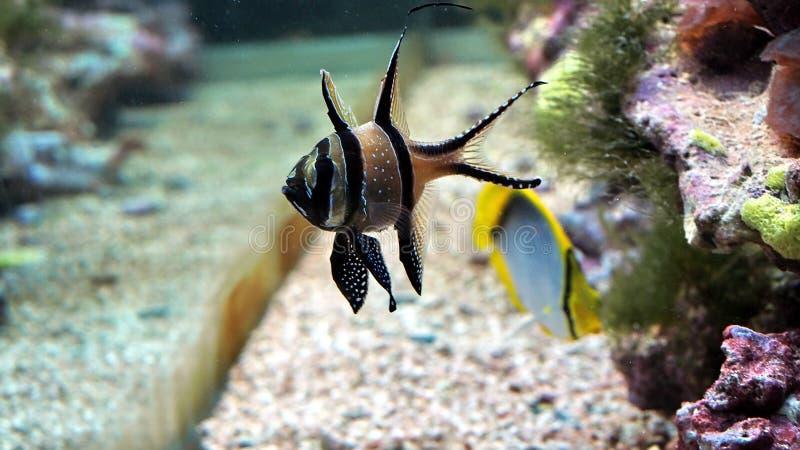 рыбы малые стоковые изображения rf