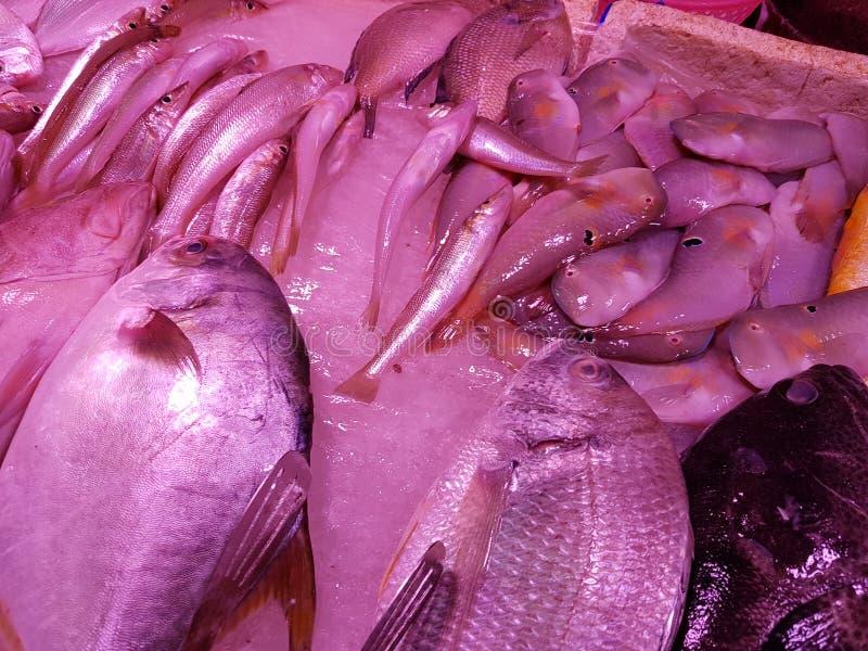 Рыбы моря стоковое фото rf