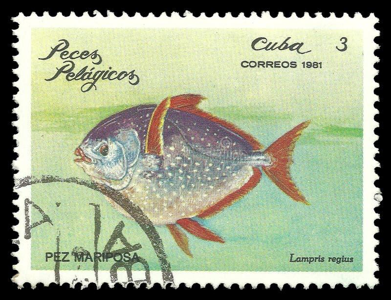 Рыбы моря, Opah стоковая фотография rf