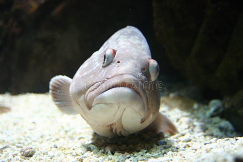 Рыбы на морском дне стоковые изображения
