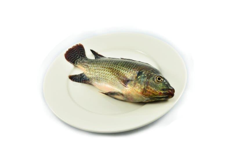 Рыбы на плите стоковые изображения rf