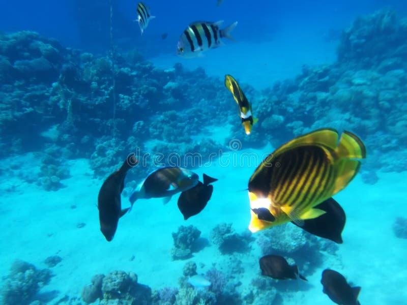 Рыбы на рифе стоковое фото