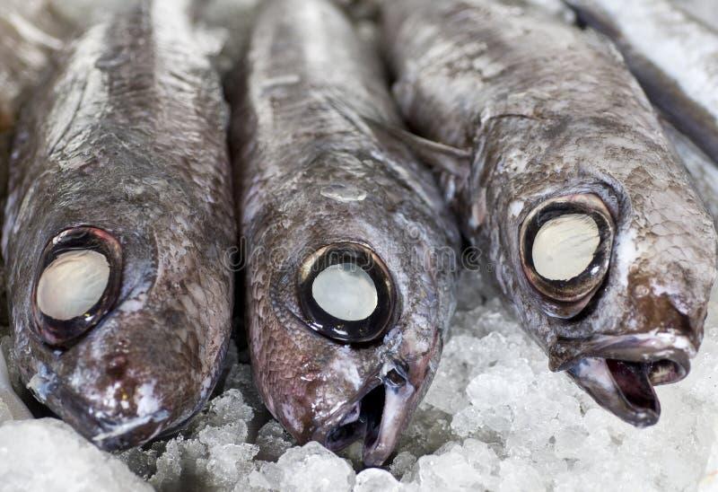 Рыбы на льде стоковое фото rf