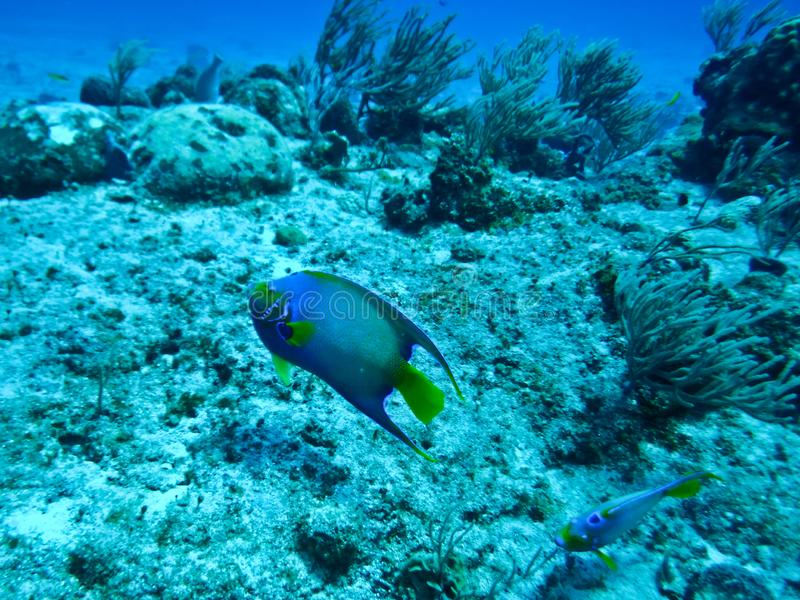 Рыбы ныряют на риф рая стоковая фотография rf