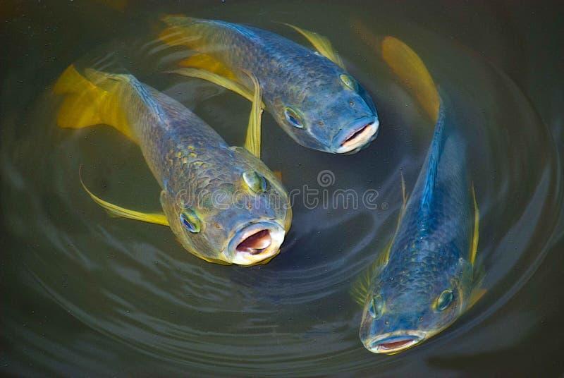Рыбы петь стоковое изображение rf