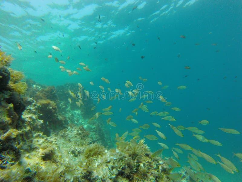 Рыбы под водой стоковая фотография rf