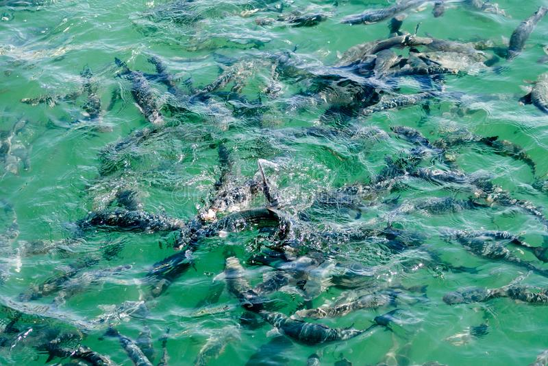 Рыбы революционизированные в море стоковое изображение rf