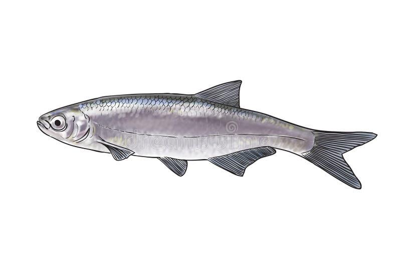 Рыбы реки иллюстрация штока