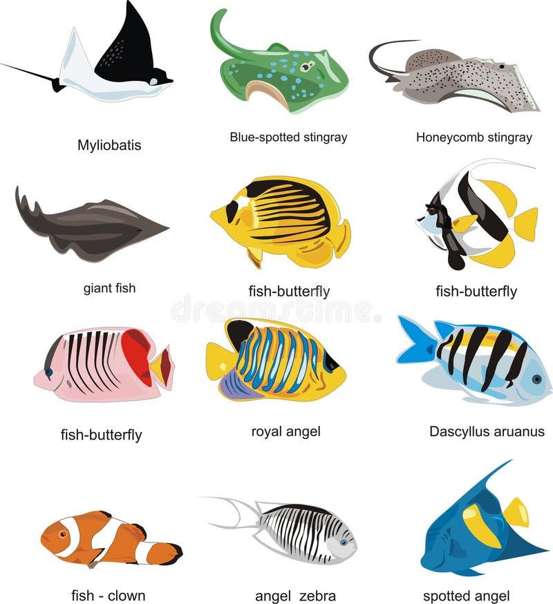 рыбы собрания иллюстрация штока