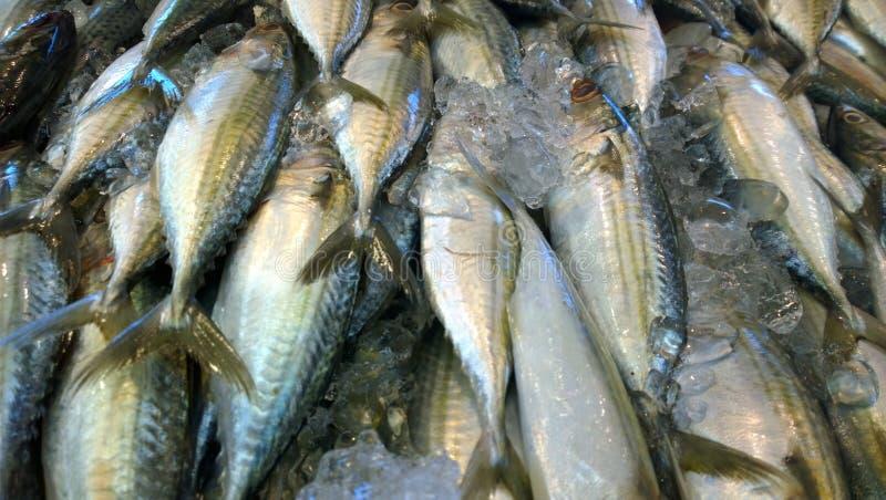 Рыбы ставриды торпедо стоковые фото