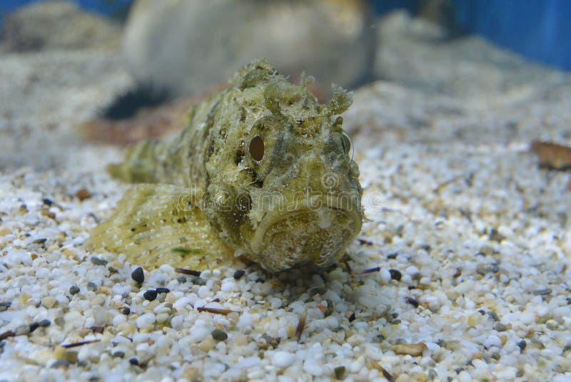 рыбы странные стоковое изображение