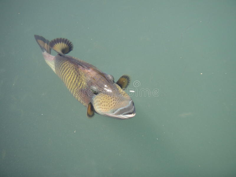 Рыбы точки спорт стоковое фото