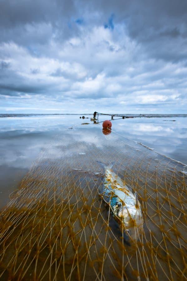 Рыбы уловили в сети на песчаном пляже стоковое изображение rf