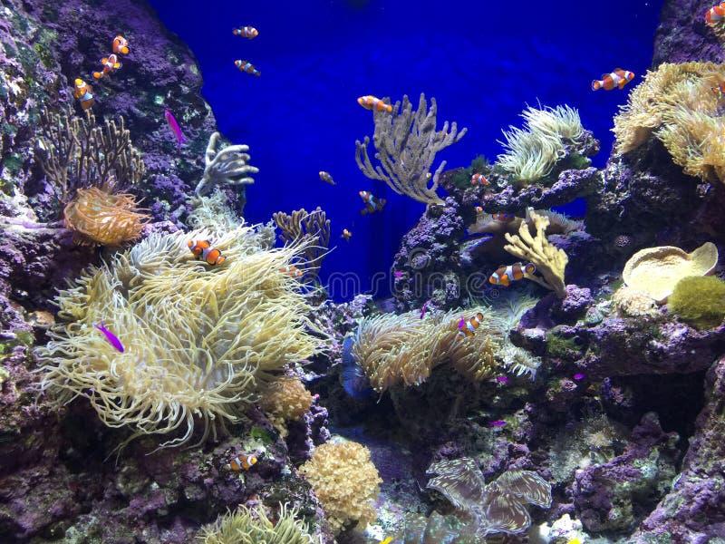 рыбы шаржа с тварью моря в таком же танке стоковые изображения rf